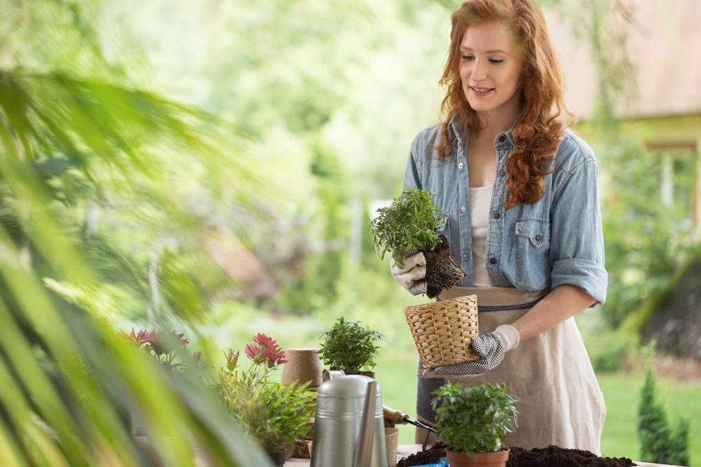 Styl donicy może podkreślić piękno rośliny.