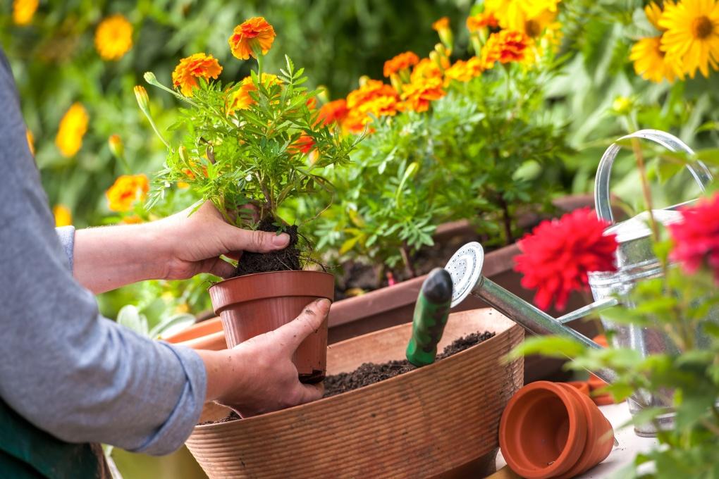 Sadzenie roślin w donicach musi być staranne.