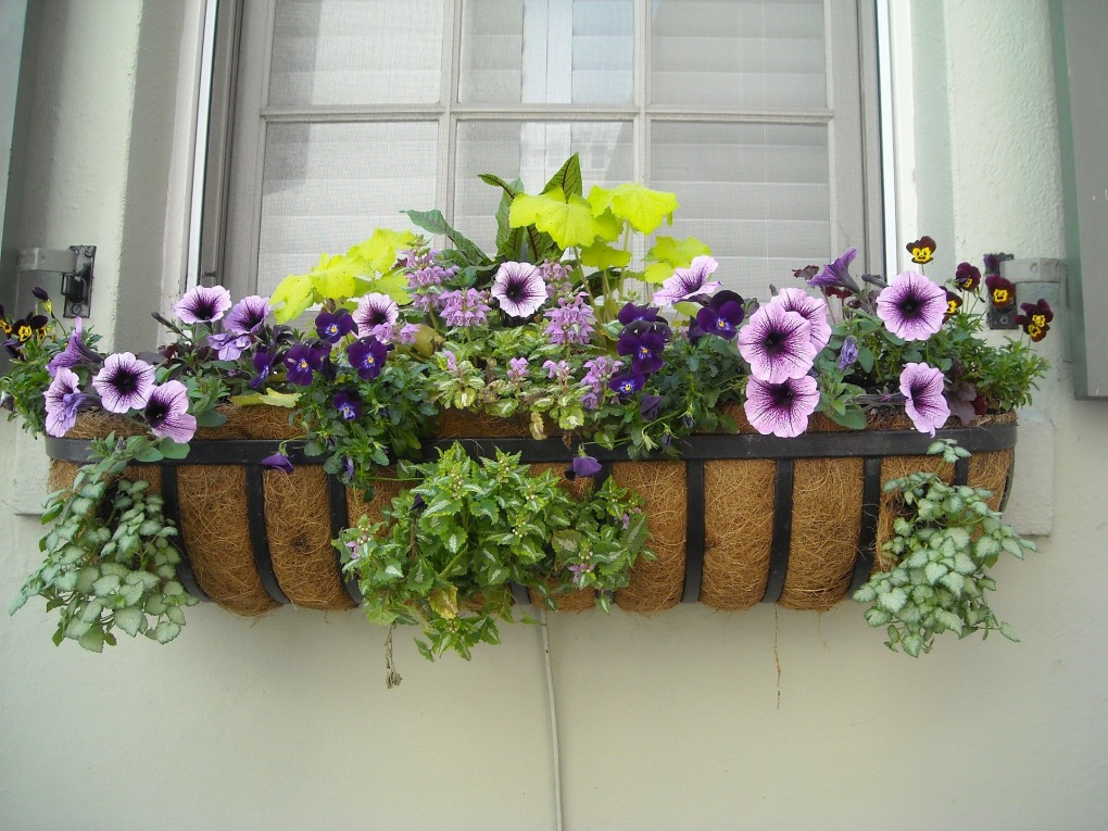 Kompozycje z roślin jednorocznych to ciekawe urozmaicenie ogrodu.